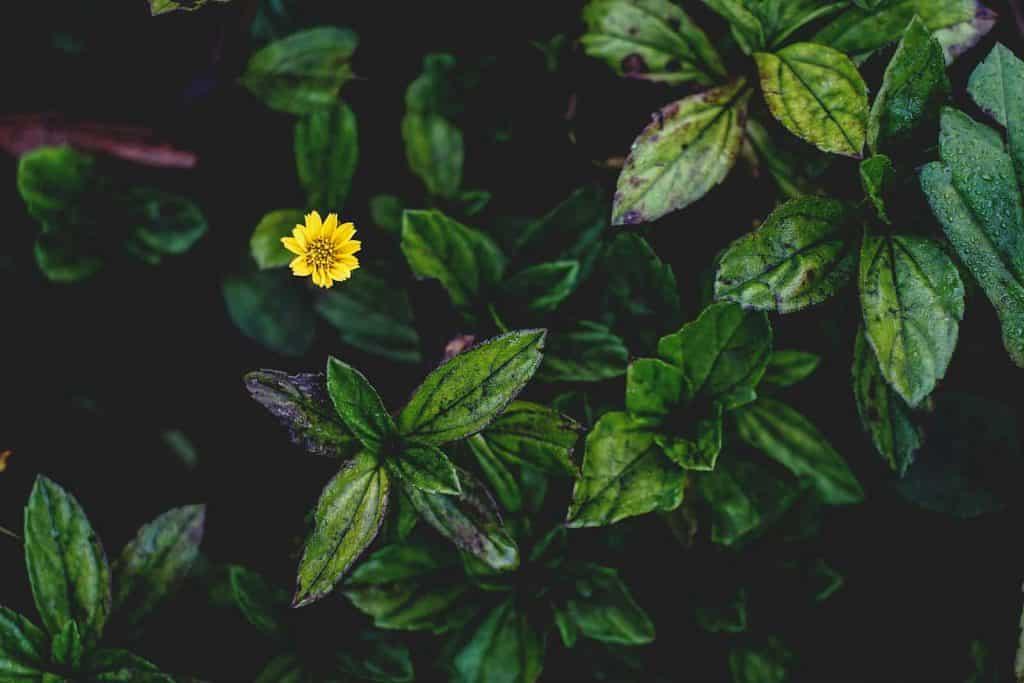 The alternative to litter - Beautiful flower peeking through the leaves